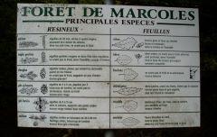 vélo,vtt,championnats du cantal vtt,coupe d'auvergne vtt,reconnaissance,forêt
